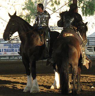 Cowboy knight