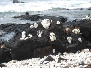 Hawaii2 009